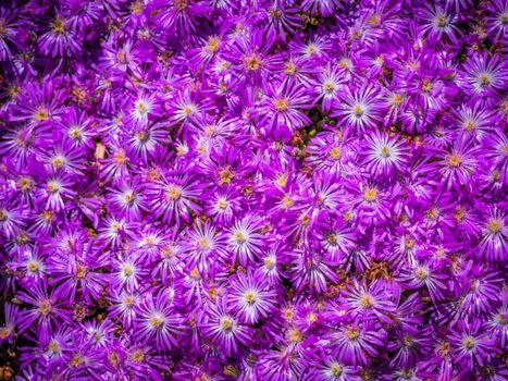 Фото бесплатно цветок, фиолетовый, астры