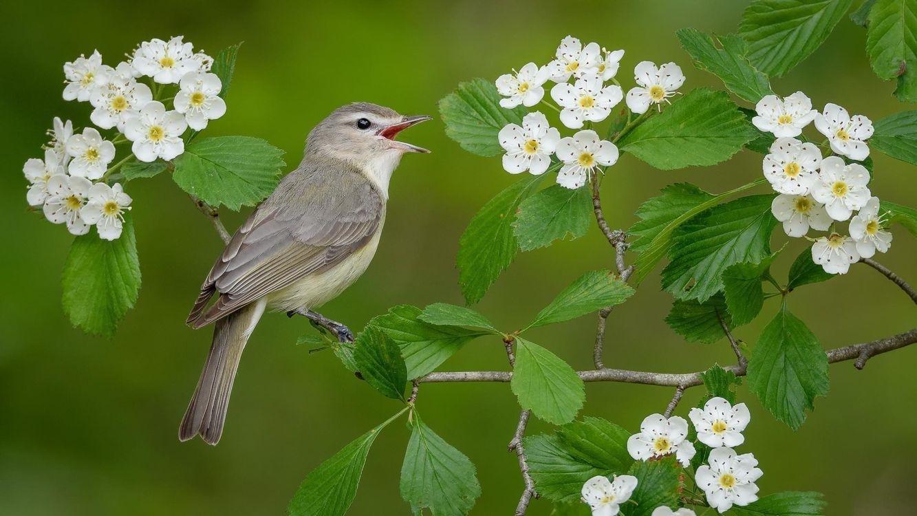 Фото бесплатно птица на ветке, птица, цветы - на рабочий стол