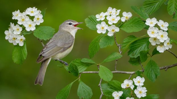 Photo free bird on a branch, bird, flowers