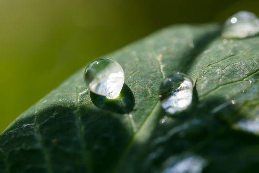 Капли дождя в солнечном свете