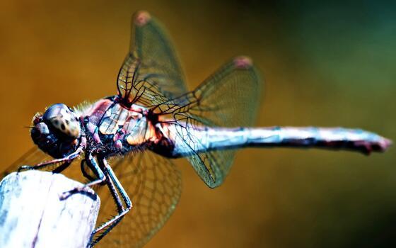Фото бесплатно фауна, стрекозы и власоглавы, членистоногое