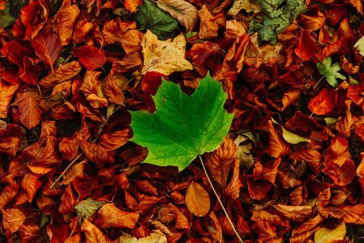 Фото бесплатно осень, опавшие листья, земля