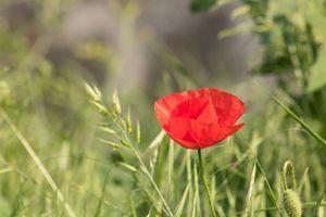 Бесплатные фото цветок,весна,растения,девушка,африка,животные,цветение