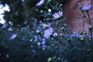 Фото бесплатно цветы, синие цветы, глубина резкости