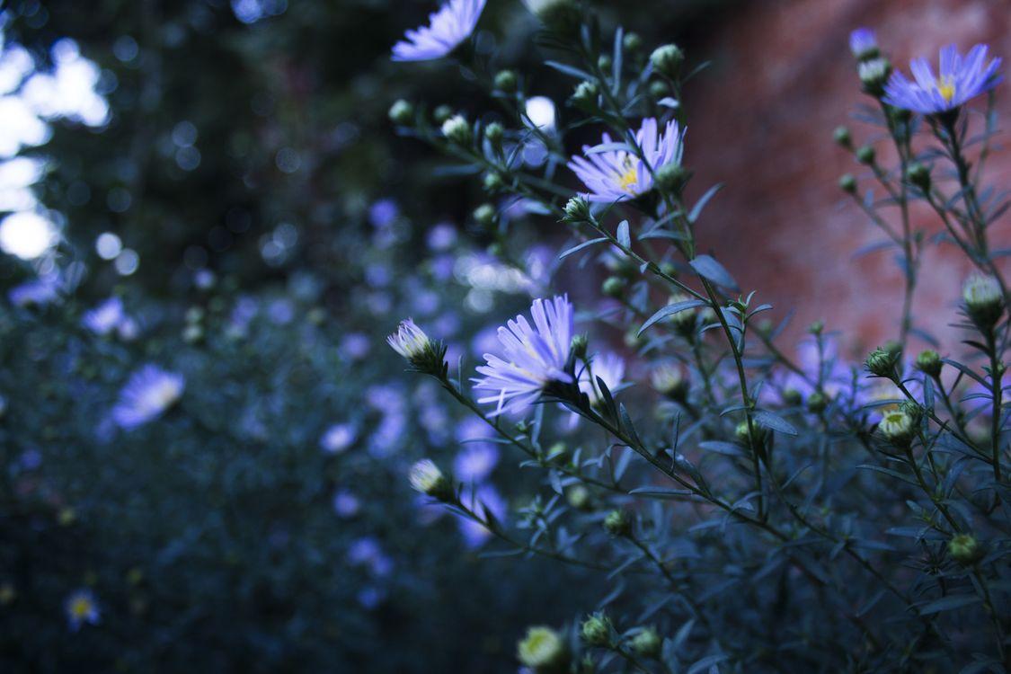 Фото бесплатно цветы, синие цветы, глубина резкости - на рабочий стол
