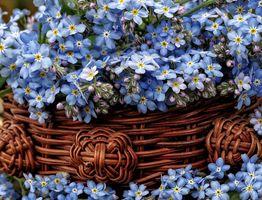 Фото бесплатно корзина, цветы, макро