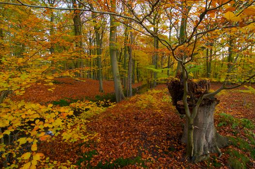 Скачать осень, лес фото с сайта fonwall