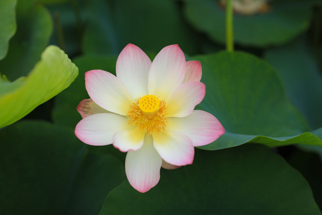 Фото бесплатно водная красота, флора, красивый цветок - на рабочий стол