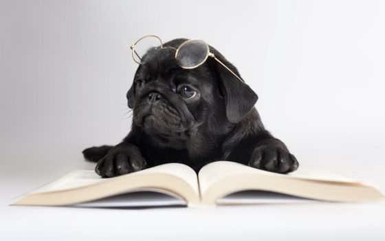 Photo free puppy, reading, glasses