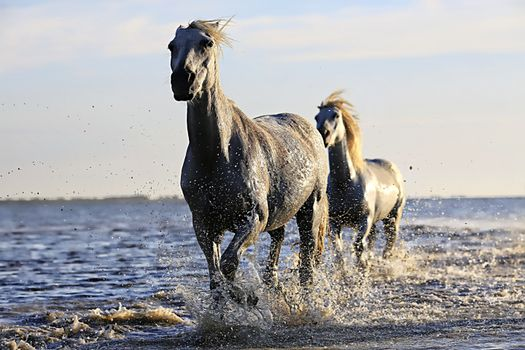 Photo free sea, white, wildlife
