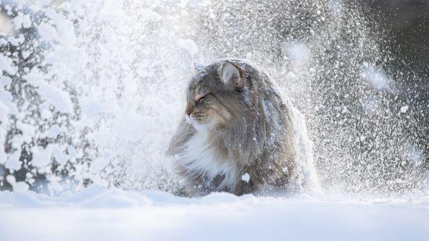 Заставки снег, зима, пушистые