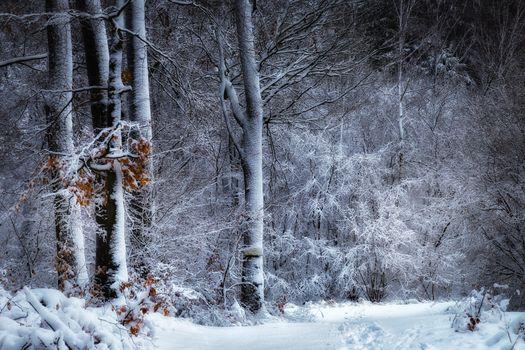 Фото бесплатно зима, лес, деревья