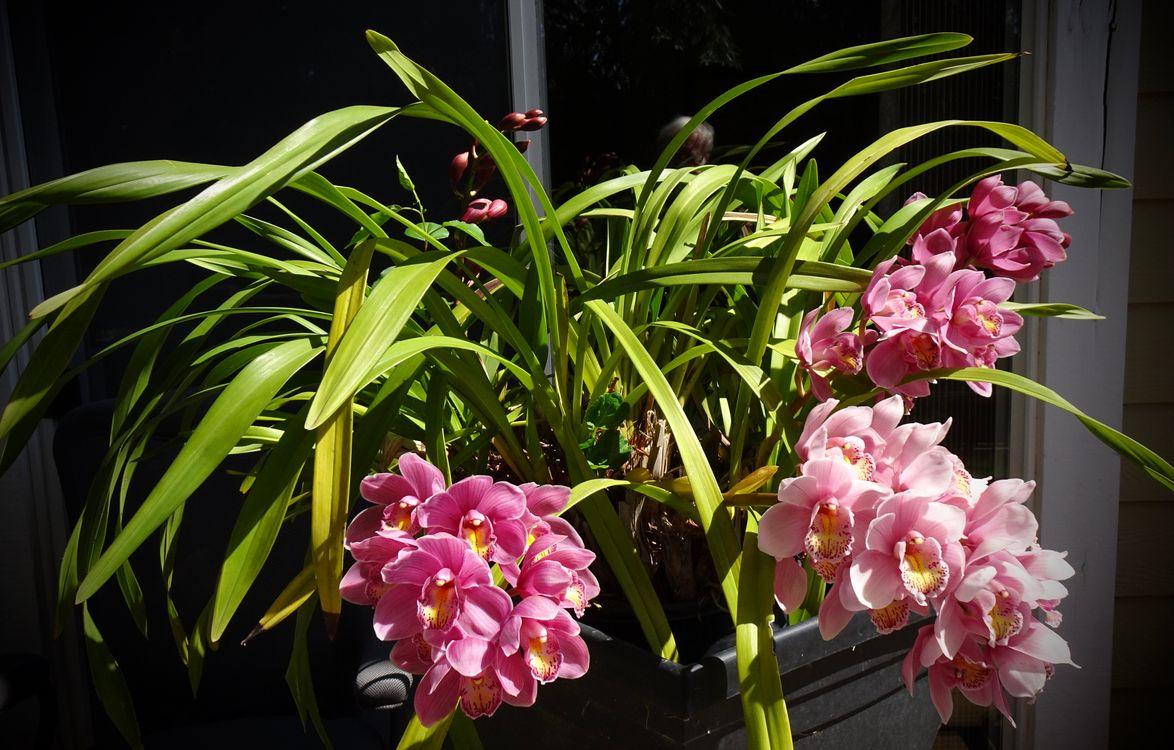 Фото цветок орхидея розовый цвет - бесплатные картинки на Fonwall