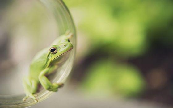 Photo free frog, macro, boke