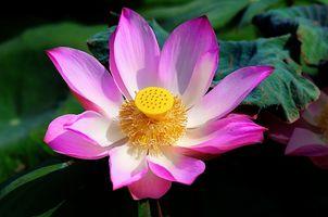 Фото бесплатно красивый цветок, красивые цветы, водная красота
