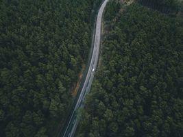 Фото бесплатно дорога, деревья, вид сверху