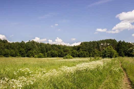 Photo free forest, nature, plains