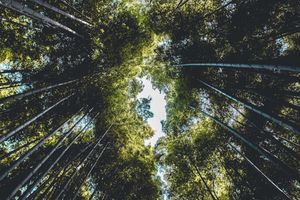 Бесплатные фото природа,деревья,бамбук
