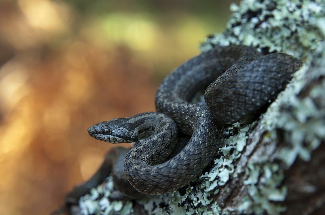 Фото змея размытый фон рептилия - бесплатные картинки на Fonwall