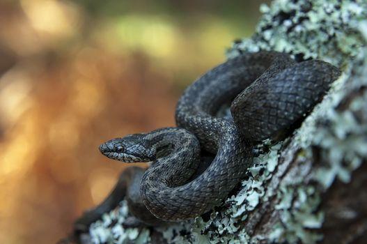 Photo free snake, boke, reptile