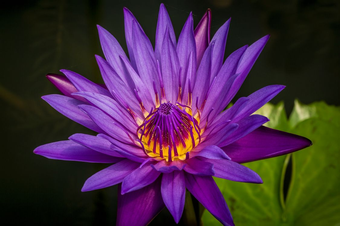 Photos for free Water Lilies, water lily, water lilies - to the desktop