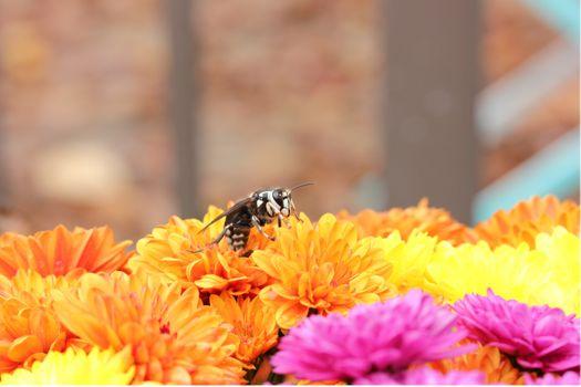 Фото бесплатно пчела, опыление, желтые цветы