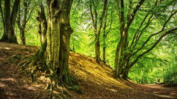 Бесплатные фото лес,деревья,косогор,природа