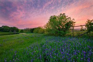 Заставки пейзаж, пруд, поле