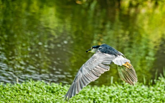 Photo free bird, fly, grass