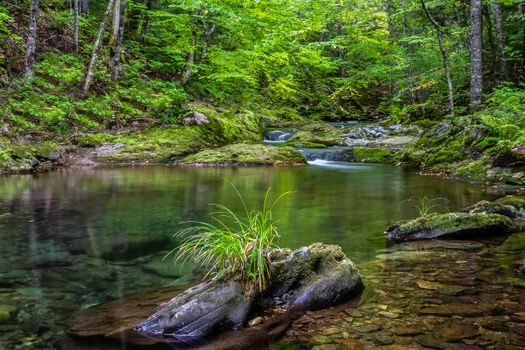 Фото бесплатно Enchanted Woods, Waterford, Canada