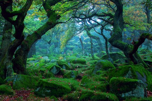 Photo free the old forest, wonderful, like a fairy tale