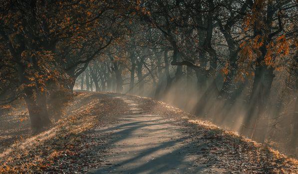 Фото бесплатно листья, солнце, грязь