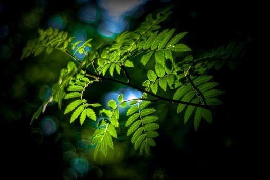 Фото бесплатно рябина, природа, ветвь
