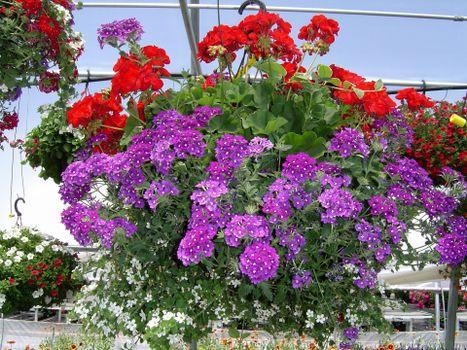 Photo free flowers, garden, flower