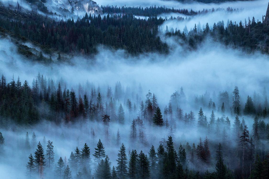 Фото бесплатно деревья, туман, пелена, trees, fog, shroud, пейзажи