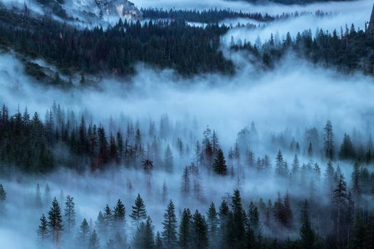 Фото бесплатно деревья, туман, пелена