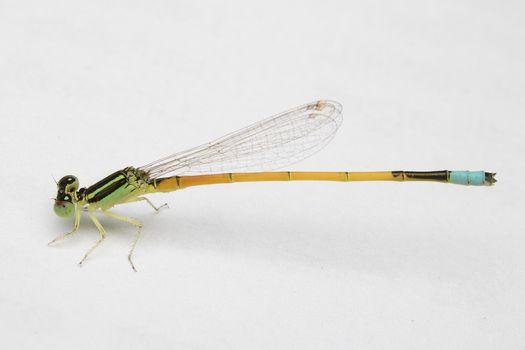 Фото бесплатно крыло, насекомое, макро