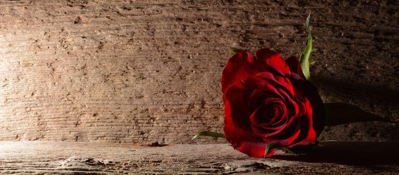 роза,розы,цветок,цветы,цветочный,цветочн