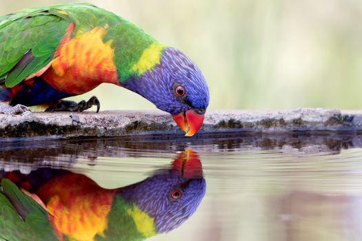 Фото бесплатно вода, отражение, птицы