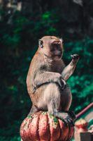 Фото бесплатно макаки, обезьяны, животные