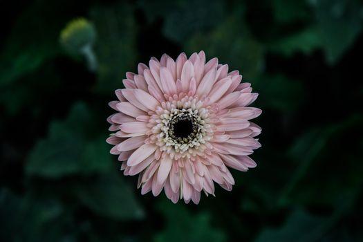 Фото бесплатно астры, цветок, бутон