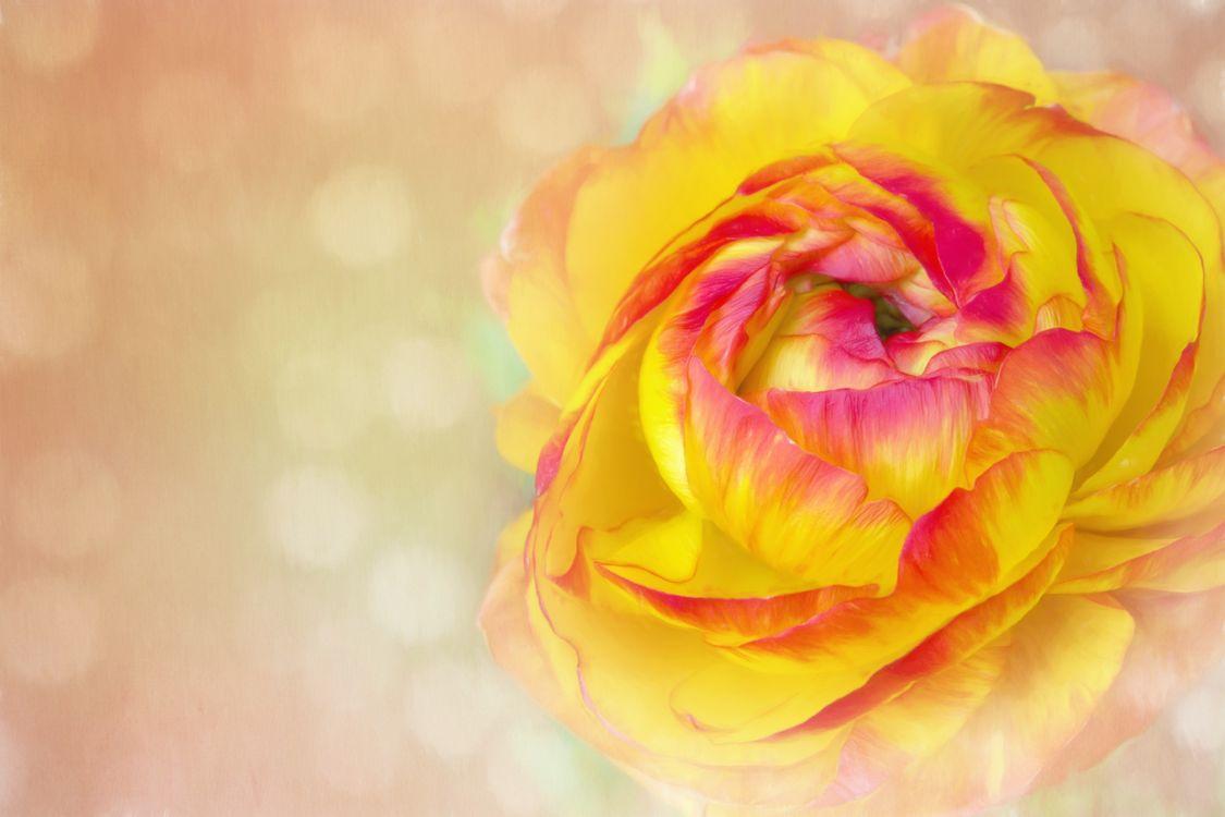 Фото лепесток букет цветов растение - бесплатные картинки на Fonwall