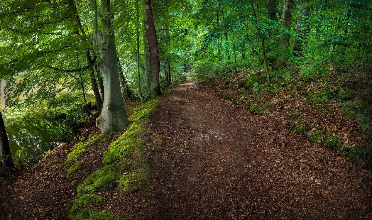 Фото бесплатно лес, деревья, дорога, озеро, пейзаж, пейзажи