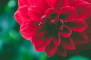 Заставки Осень,задний план,красивая,Красоту,Черный,цветение,цвести