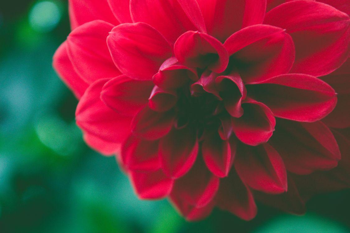 Фото бесплатно Осень, задний план, красивая, Красоту, Черный, цветение, цвести, Ботанический, ботаника, букет, Яркий, Закрыть, Крупным планом, цвет, темно, цветы