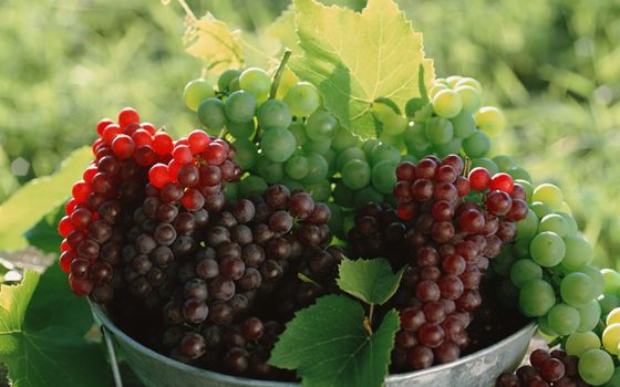 Photo free grapes, fruits, leaves