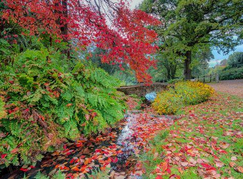 Фото бесплатно осень, осенние листья, парк
