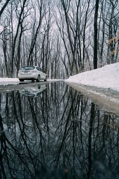 Photo free car, reflection, trees