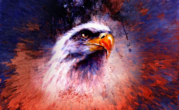 Photo free eagle, drawing, graphics