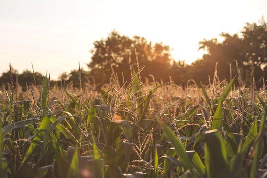 Фото бесплатно трава, растение, закат